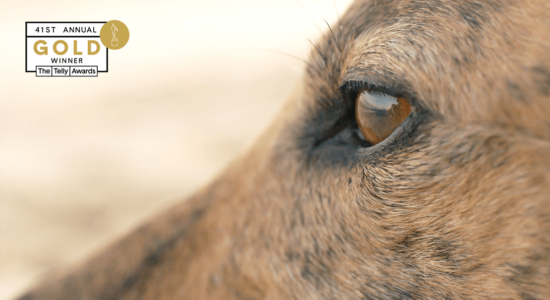 Adopt a Retired Racer – Nonprofit